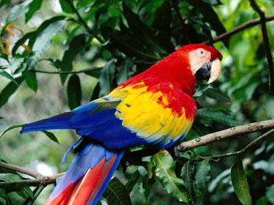 عكس پرنده زیبا-طوطی